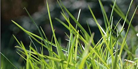 Vortragsreihe Ayurvedische Jahreszeiten: Vasanta - Frühling Tickets