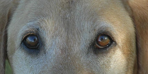 Through a Dog's Eyes - Connect/ train from inside the dog's mind