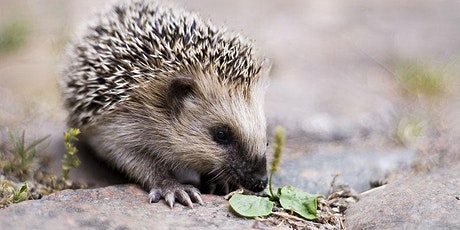 Hedgehog Tales for Children and Families tickets