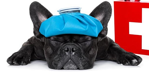 Pet First Aid Course for Pet Owners and Pet Care Professionals