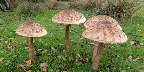 Fungi Forage and  Cook Up (Ashdown Forest, Forest Row) tickets