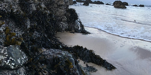 Springtime Seaweed and Coastal Forage