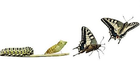 El Camino de la Transformación: convertir el cambio en oportunidad de éxito entradas