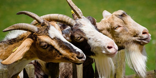 Fairy Tale Magic - Three Billy Goats Gruff (4-9 años)
