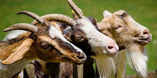 Fairy Tale Magic - Three Billy Goats Gruff (6-9 años)