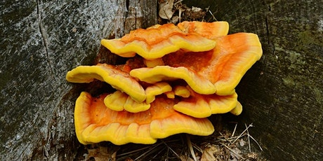 2020 September Mushroom Foraging Hike tickets