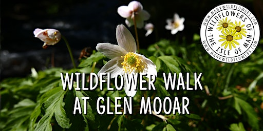 Wildflower Walk at Glen Mooar