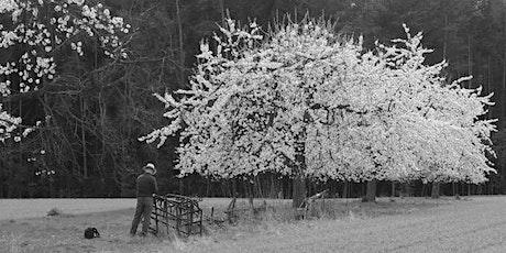 Kirschblüte und Photographie mit Christian Weigang Tickets