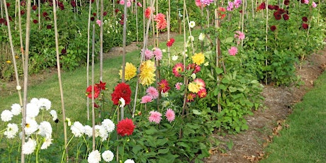 Planning Your Cut Flower Garden tickets