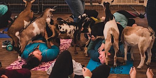 Goat Yoga & Brunch