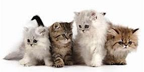 2020 Pet Calendar Competition for the 2021 Calendar