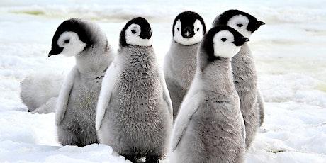 Sunset Penguin Tour tickets