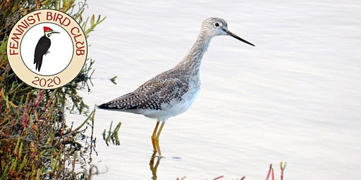 Winter Bird Walk at Crissy Field