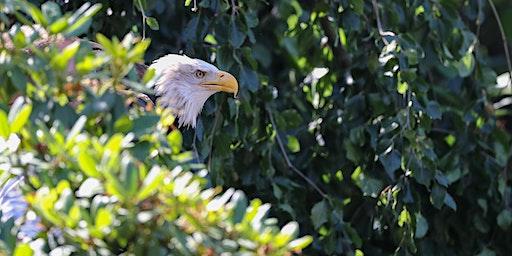 Vogelflug im Weltvogelpark Walsrode - Schwerpunkt AF-System