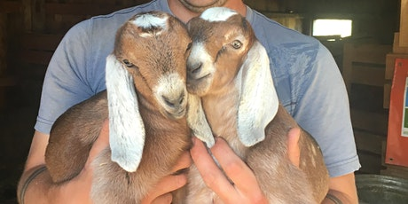 Baby Goat Snuggling- Small Group tickets