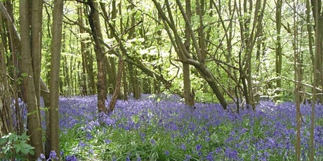 Croydon Active Paddlers Members - Weekend Retreat to March Wood, Kent tickets