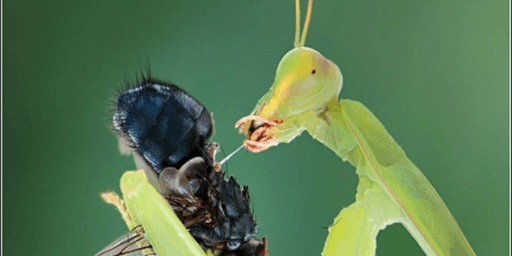 Insect Diversity and Conservation