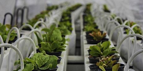 Visite d'une ferme hydroponique sur les toits de Paris billets