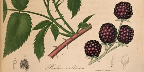Library Pop-up: Herbals tickets