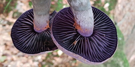 Fungi Forage and Woodland Cook Up (Canterbury) tickets