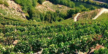 Northern Spain and Portugal: The Land of the Thousand Rivers - Wine Tasting tickets
