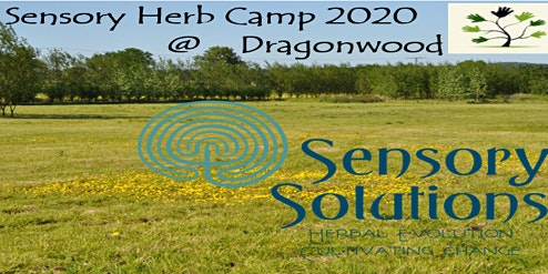 Sensory Herb Camp  at Dragonwood 2020 SHC