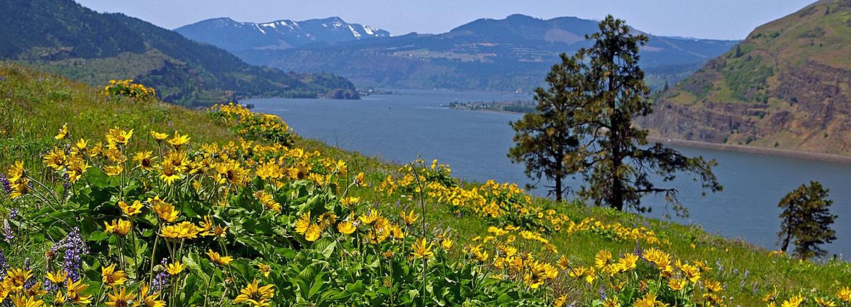 Mosier Plateau Wildflowers, OR
