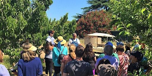 Farm Tour & Farm Stand (August 16)