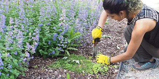 WWL Workshop Series: Garden Maintenance