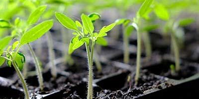 Growing Your Own Vegetable Plants from Seed