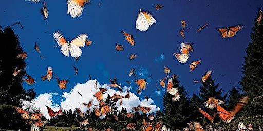 Valle de Bravo y Mariposas Monarca