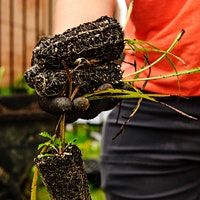 WWL Workshop Series: Planting Techniques