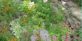 Help Stop Flooding by Building a Beautiful Rain Garden