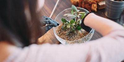 Rouse Hill, Terrarium Workshop