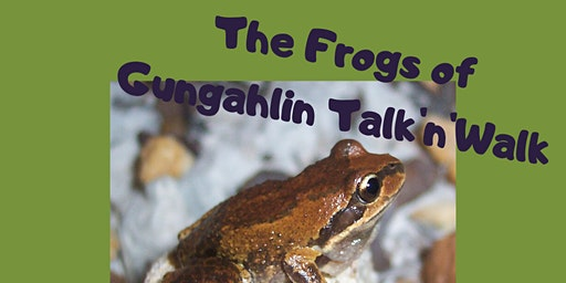 Frogs of Gungahlin Talk'n'Walk