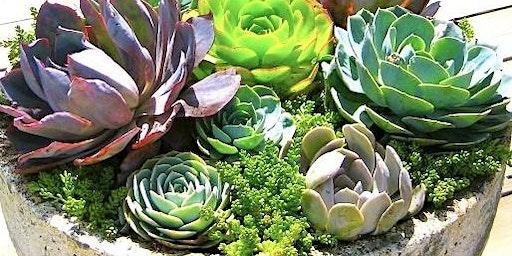 Succulent&Sip 2/25