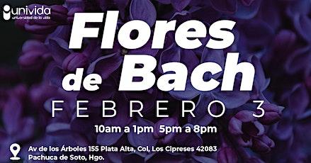 Taller Flores de Bach PACHUCA boletos