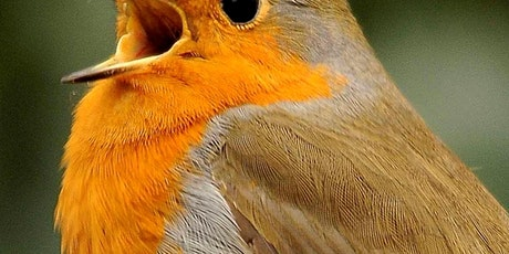 Dawn Chorus Walk & Breakfast tickets