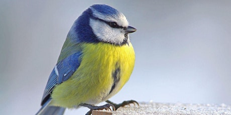 Birdwatching Walk at Cassiobury Park tickets