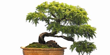 Australian Plants as Bonsai and Symposium tickets