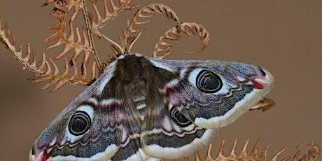 Butterflies & Moths - Identification and Conservation  tickets