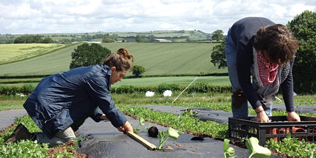 Community Farmer Day - 27 June - harvesting, planting and weeding tickets