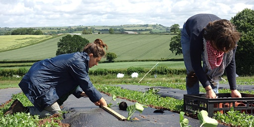 Community Farmer Day - 27 June - harvesting, planting and weeding