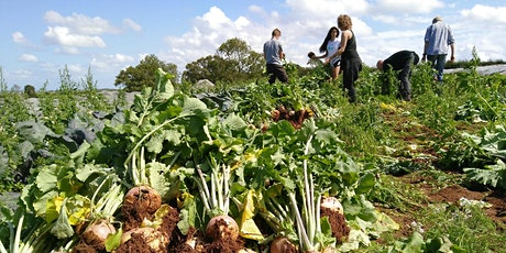 Community Farmer Day - 24 October - autumn harvesting and polytunnel planting tickets