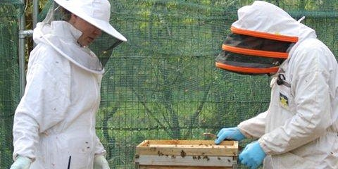 Bee Experience Day