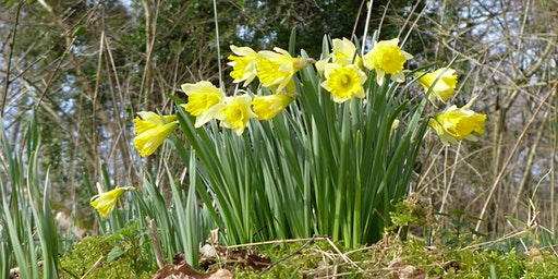 Blashford Lakes Wildlife Tots: March into Spring