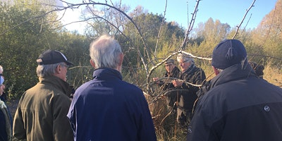 Orchard Pruning & Maintenance