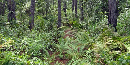 Withlacoochee State Forest Trail Maintenance_Feb. 2020
