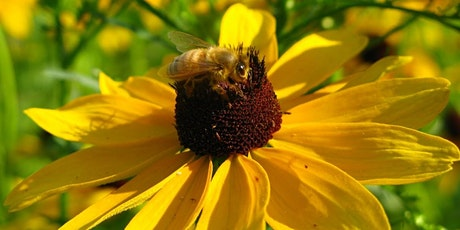 Bringing Pollinators to your Backyard Sanctuary tickets
