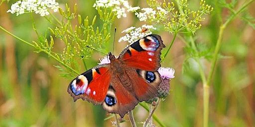 Spring Talks 2020: Life of a Wildlife Warden - Butterflies